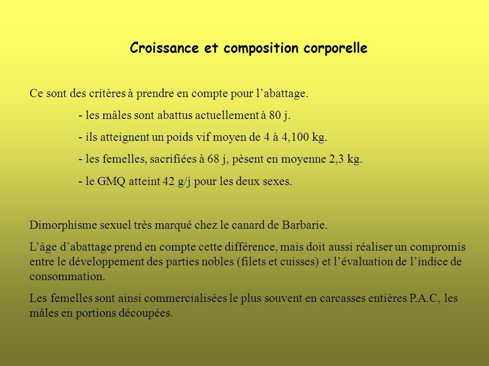 Croissance et composition corporelle