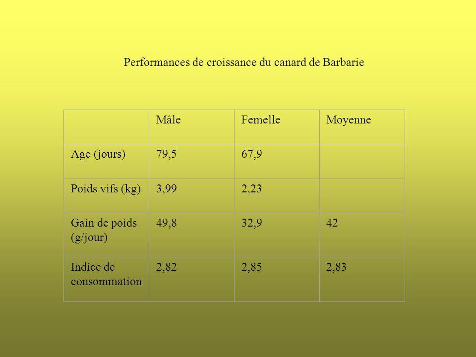Performances de croissance du canard de Barbarie