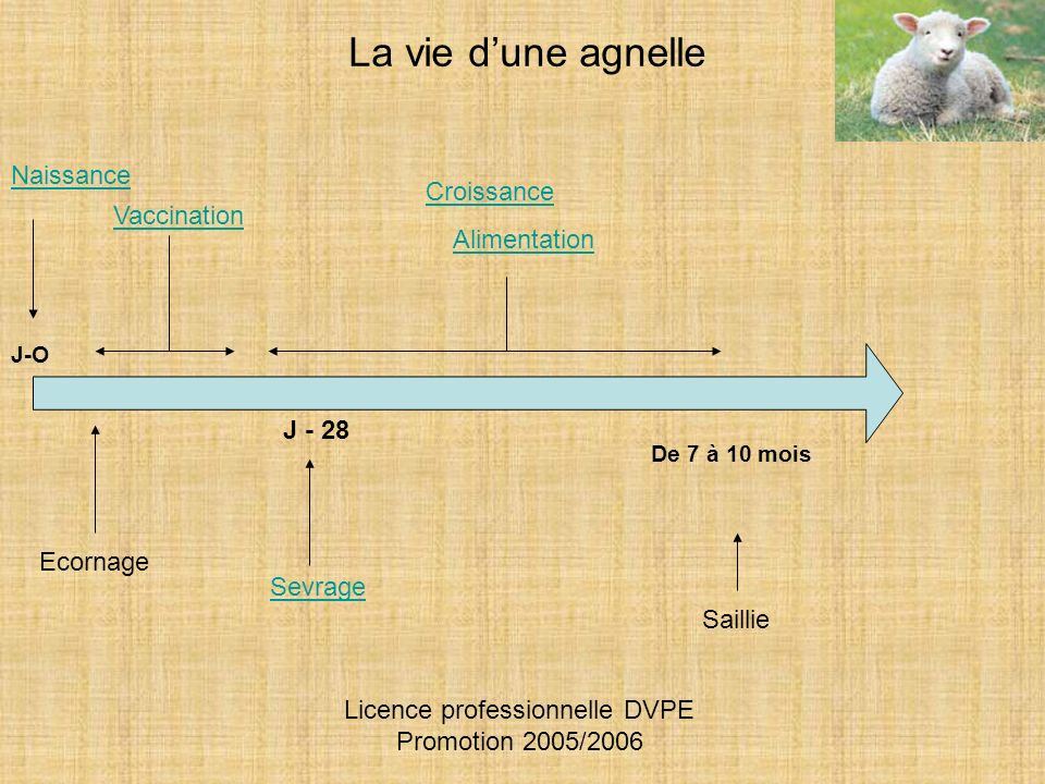Licence professionnelle DVPE