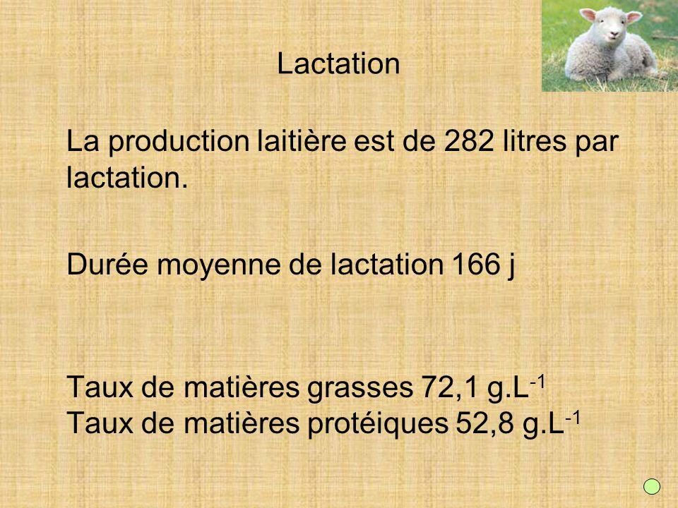 Lactation La production laitière est de 282 litres par lactation. Durée moyenne de lactation 166 j.