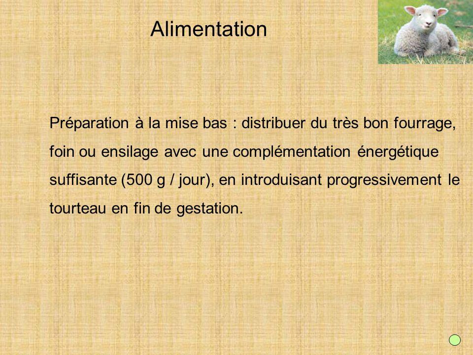 Alimentation Préparation à la mise bas : distribuer du très bon fourrage, foin ou ensilage avec une complémentation énergétique.