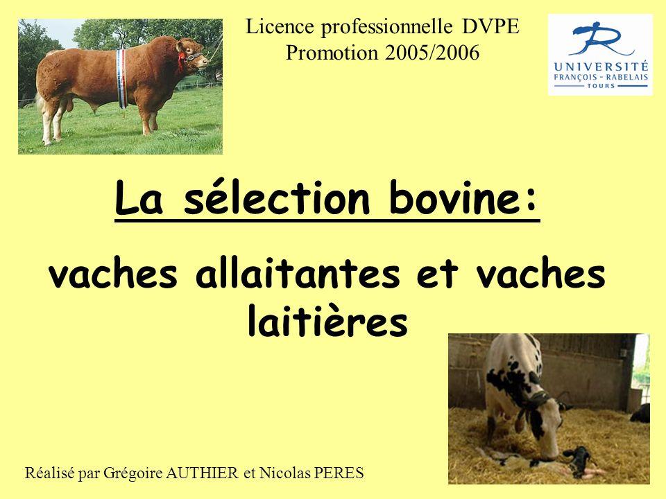 vaches allaitantes et vaches laitières