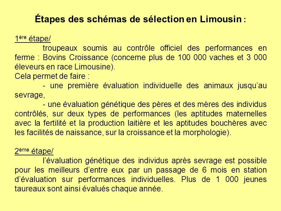 Étapes des schémas de sélection en Limousin :