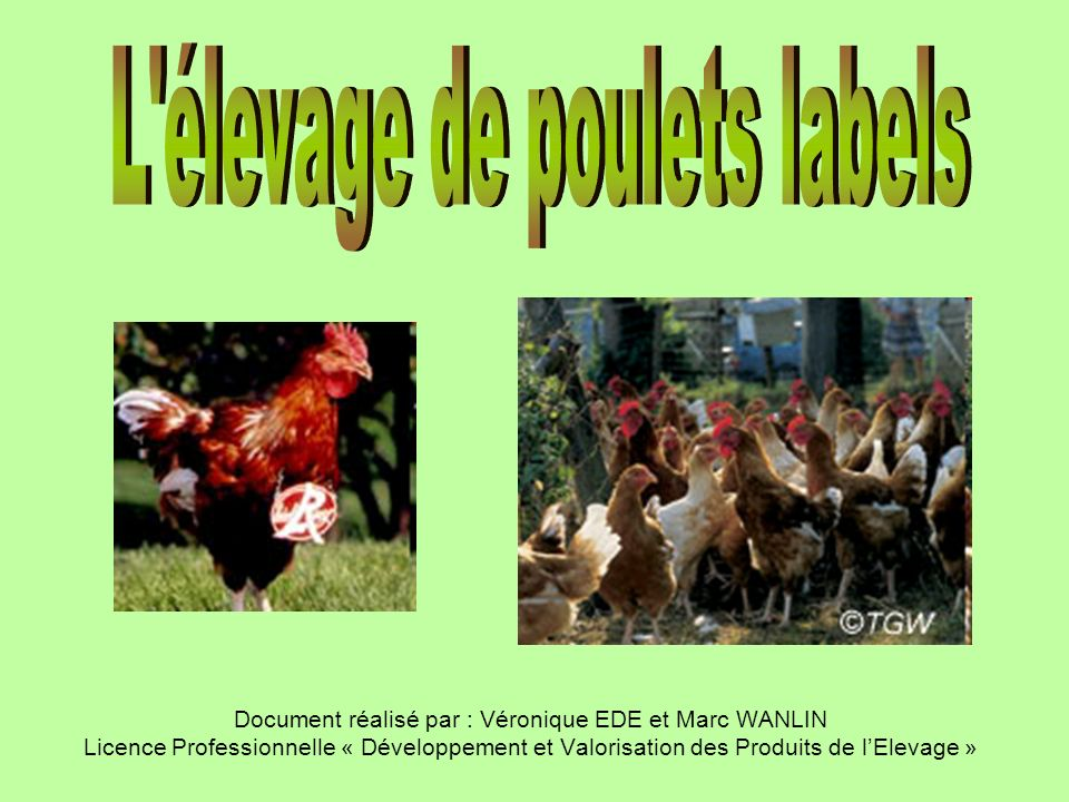 L élevage de poulets labels