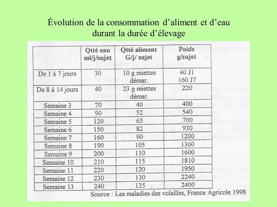 Évolution de la consommation d'aliment et d'eau durant la durée d'élevage