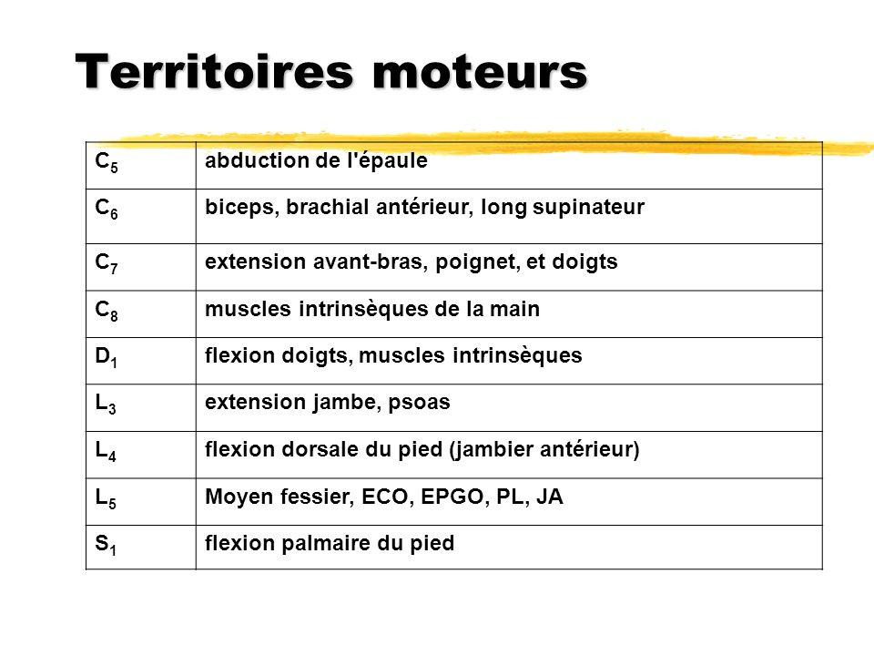 Territoires moteurs C5 abduction de l épaule C6