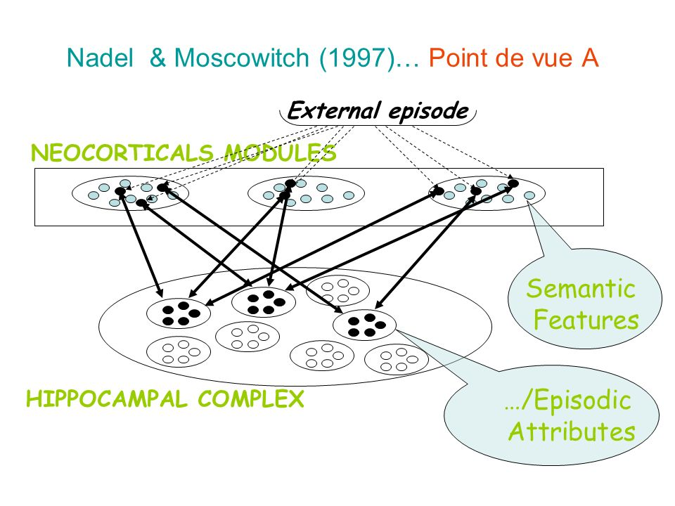Nadel & Moscowitch (1997)… Point de vue A