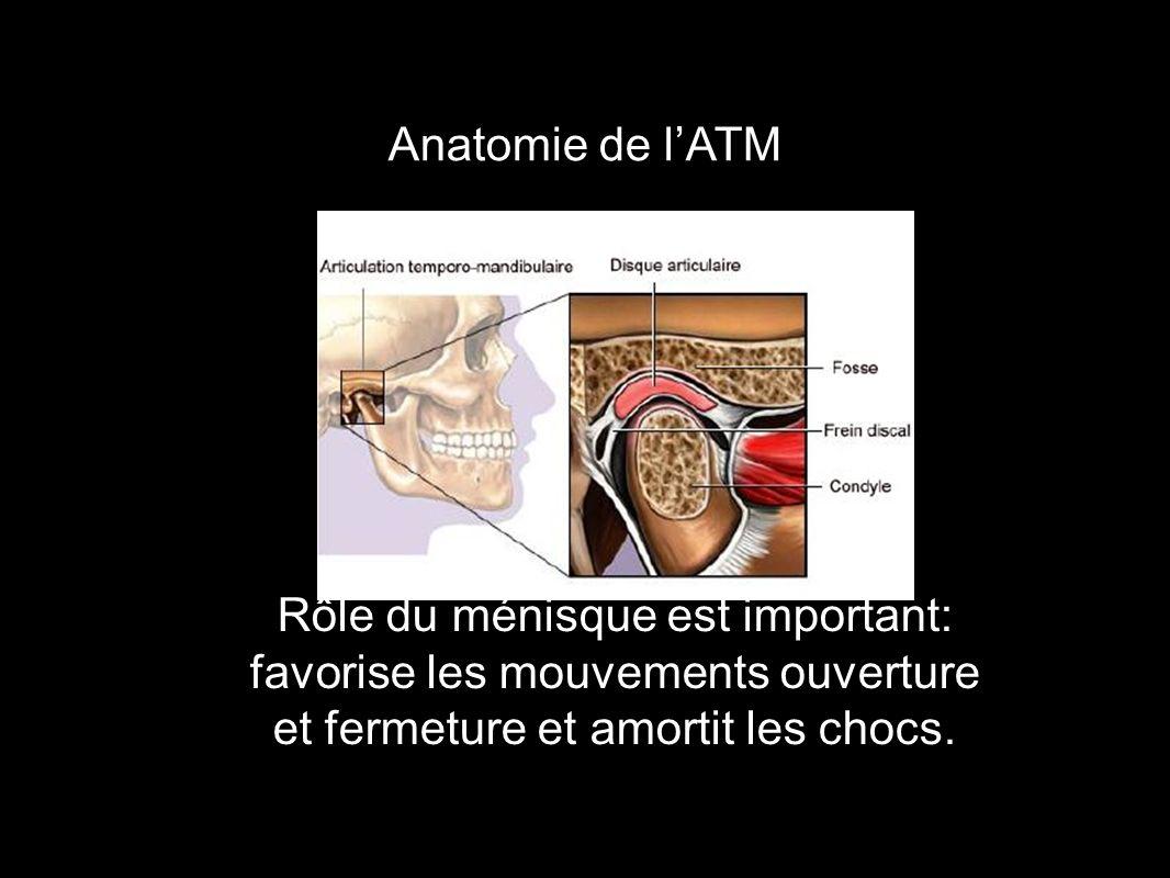 Anatomie de l'ATM Rôle du ménisque est important: favorise les mouvements ouverture et fermeture et amortit les chocs.