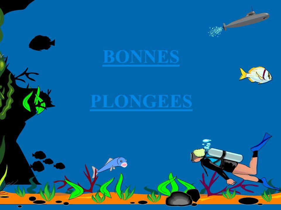 BONNES PLONGEES