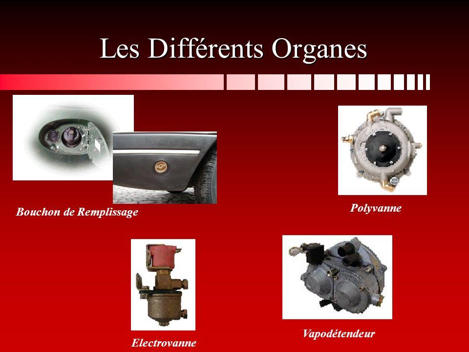 Les Différents Organes