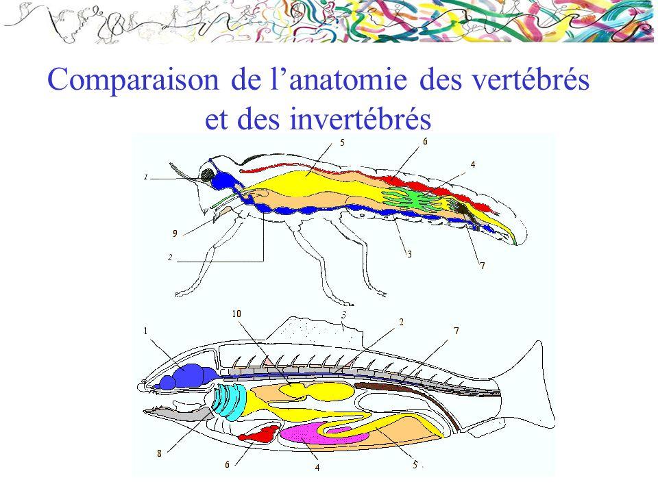 Comparaison de l'anatomie des vertébrés et des invertébrés