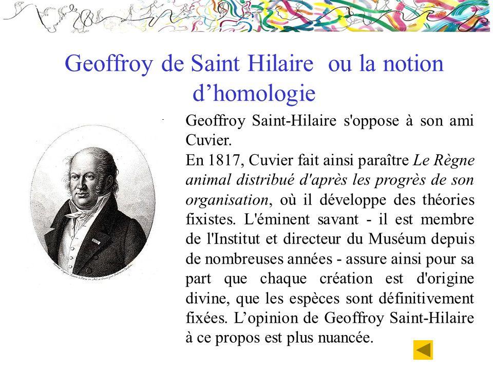 Geoffroy de Saint Hilaire ou la notion d'homologie