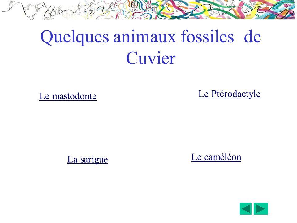 Quelques animaux fossiles de Cuvier