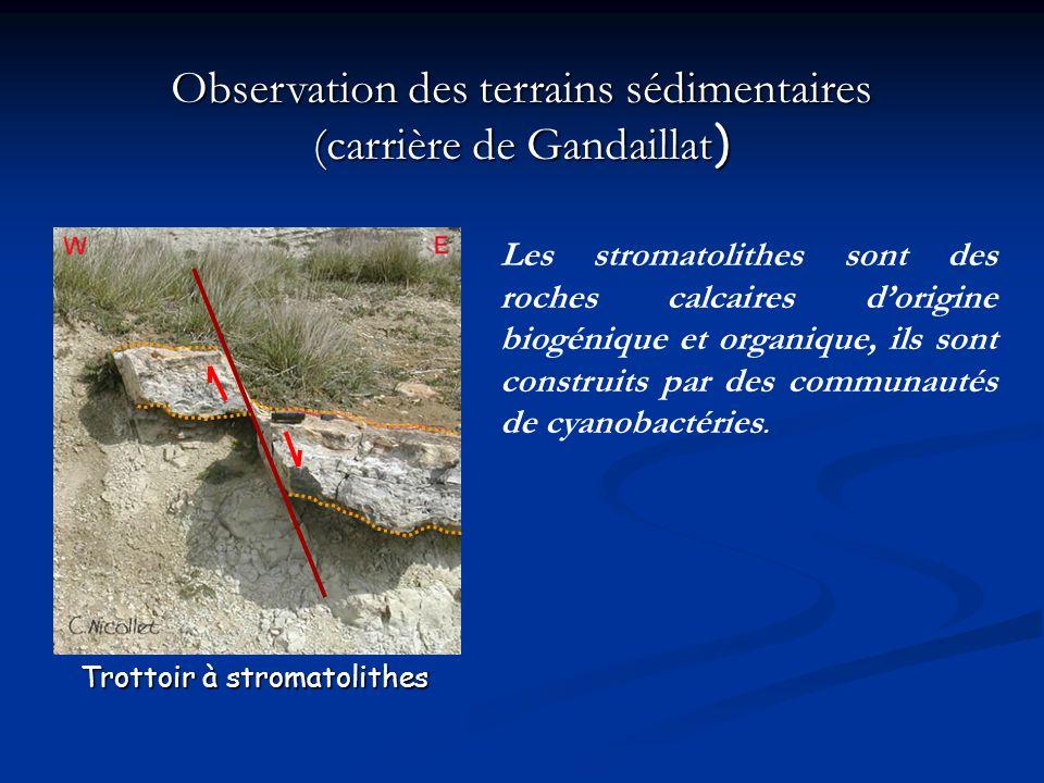 Observation des terrains sédimentaires (carrière de Gandaillat)
