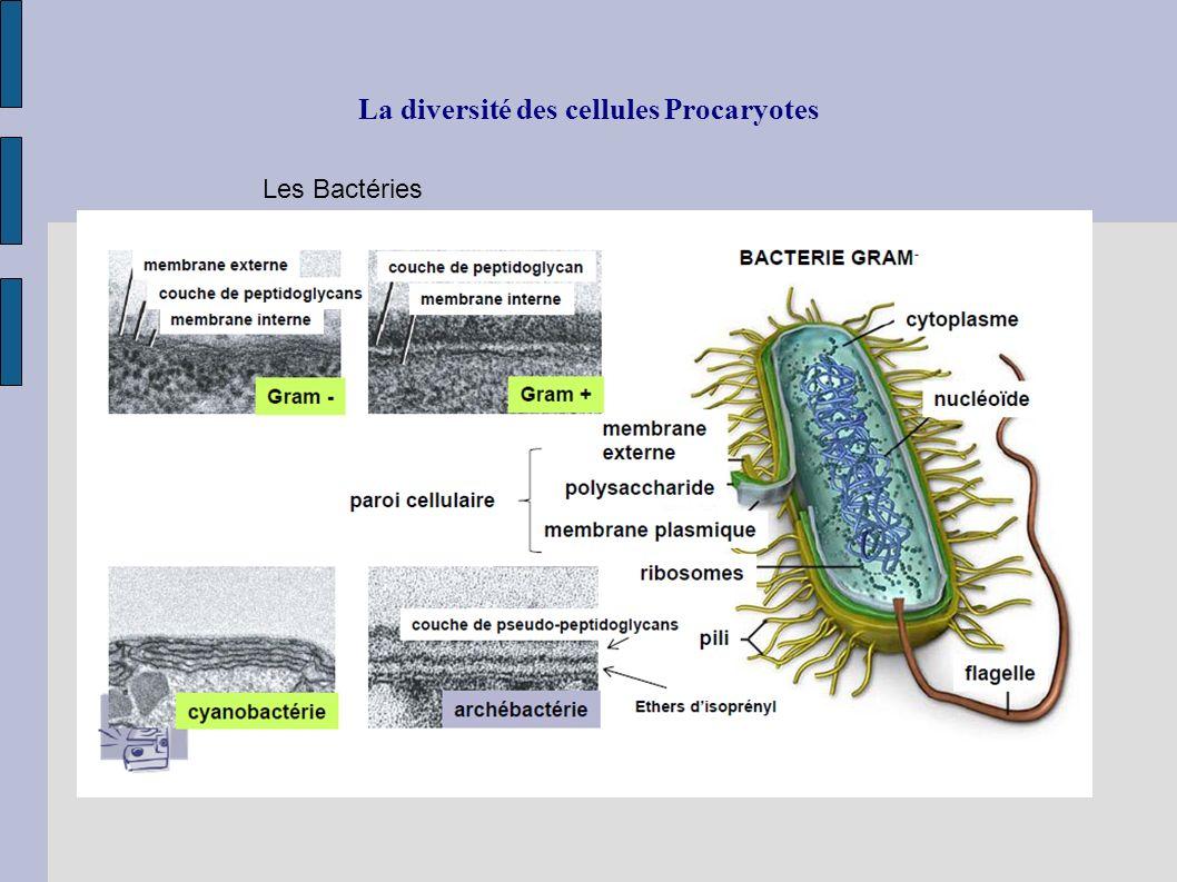 La diversité des cellules Procaryotes