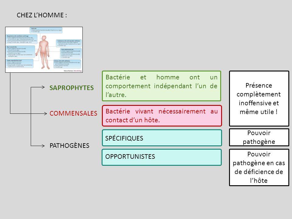 Bactérie et homme ont un comportement indépendant l'un de l'autre.