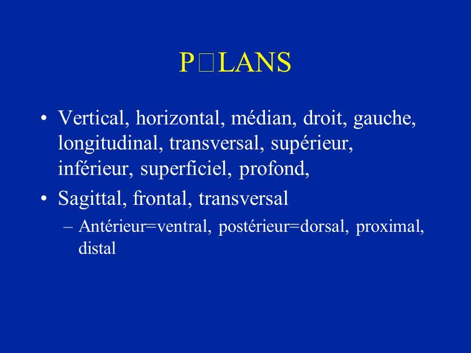 PLANS Vertical, horizontal, médian, droit, gauche, longitudinal, transversal, supérieur, inférieur, superficiel, profond,