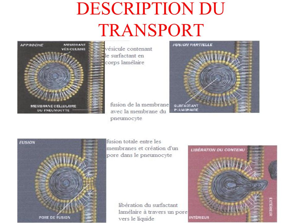 DESCRIPTION DU TRANSPORT