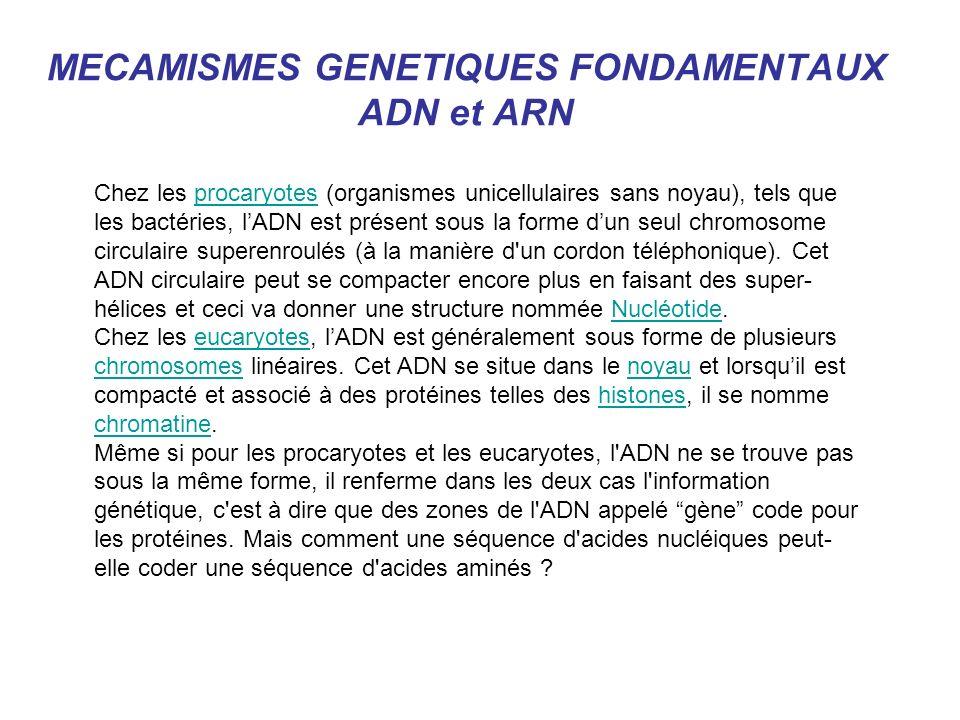 MECAMISMES GENETIQUES FONDAMENTAUX ADN et ARN