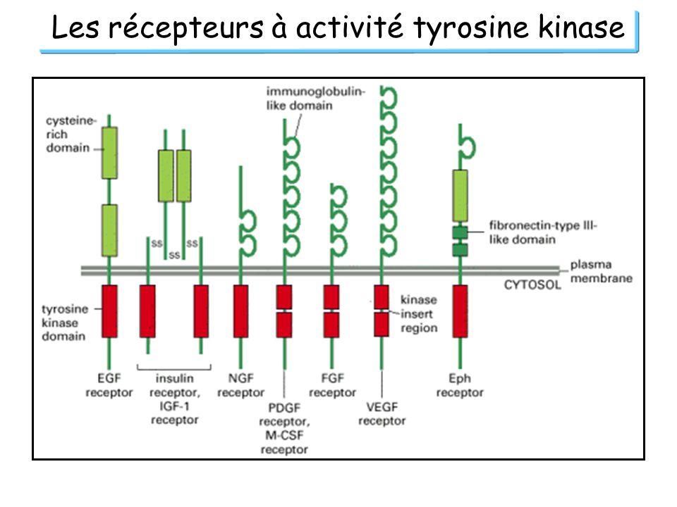 Les récepteurs à activité tyrosine kinase