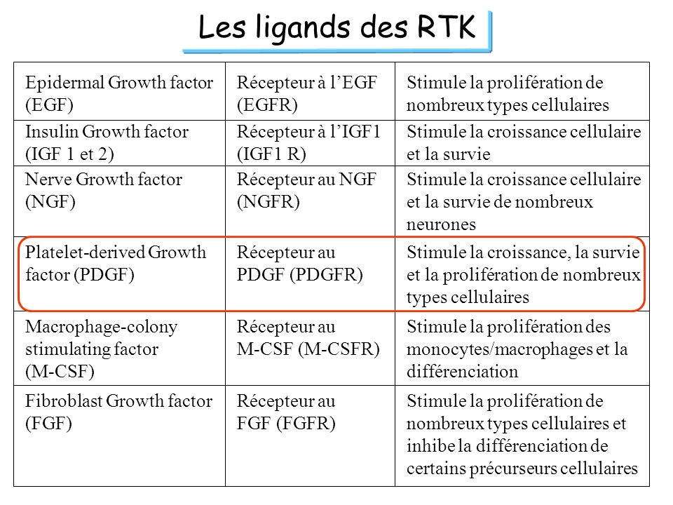 Les ligands des RTK Epidermal Growth factor (EGF)