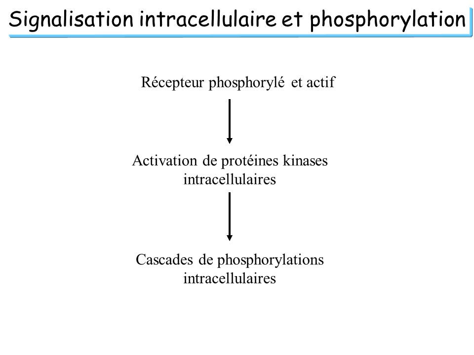 Signalisation intracellulaire et phosphorylation