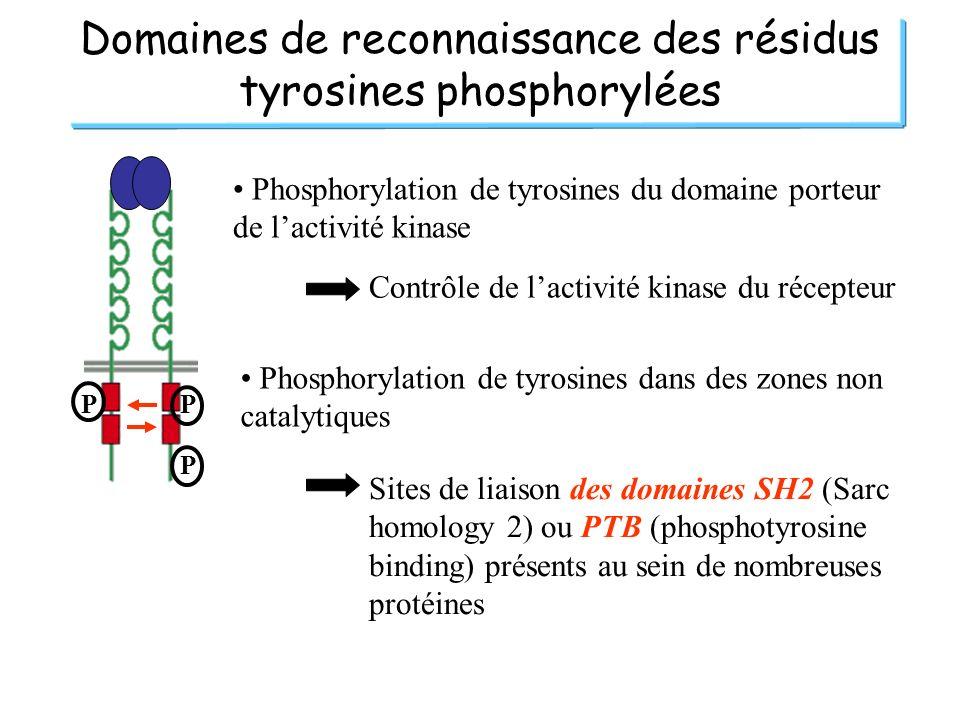 Domaines de reconnaissance des résidus tyrosines phosphorylées
