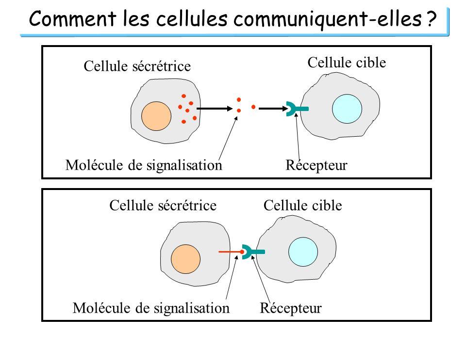 Comment les cellules communiquent-elles