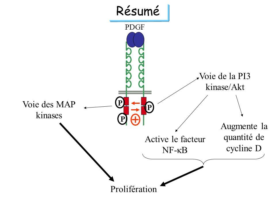 Résumé Voie de la PI3 kinase/Akt Voie des MAP kinases