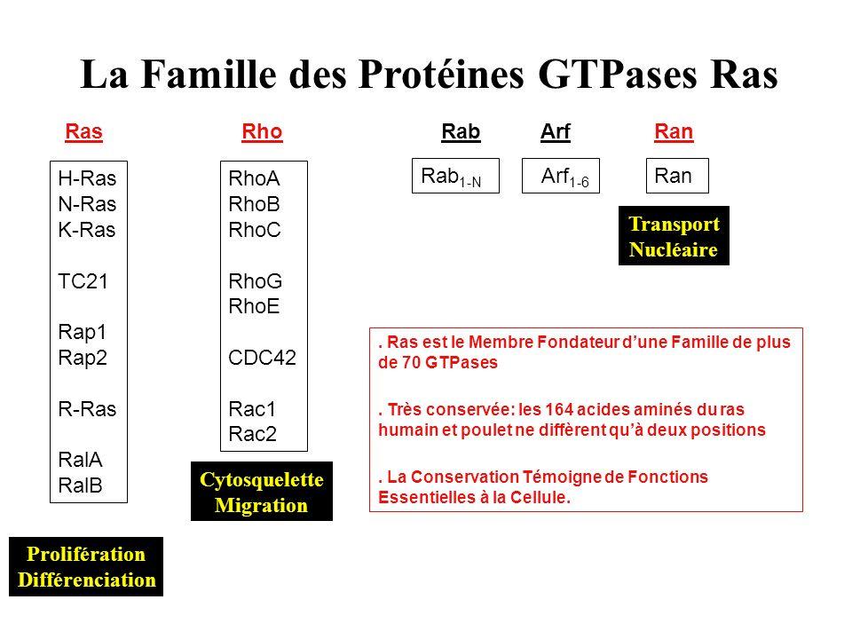 La Famille des Protéines GTPases Ras