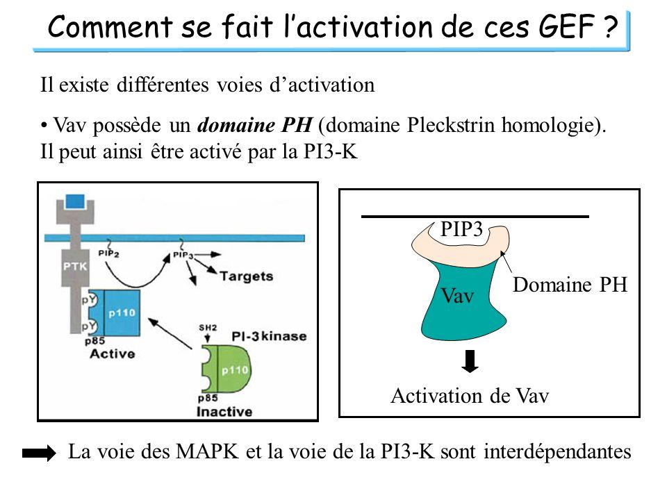 Comment se fait l'activation de ces GEF