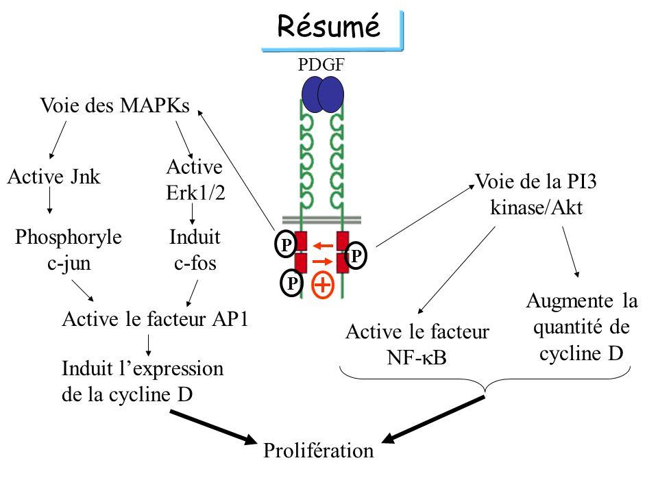 Résumé Voie des MAPKs Active Erk1/2 Active Jnk