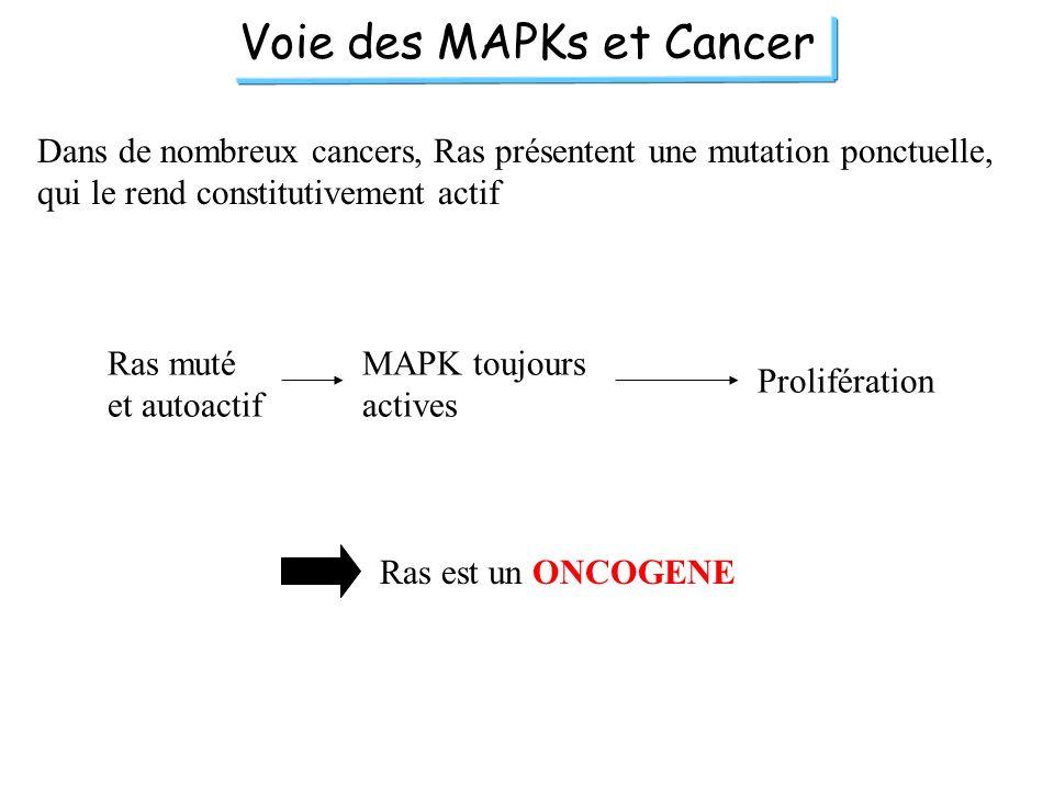 Voie des MAPKs et Cancer