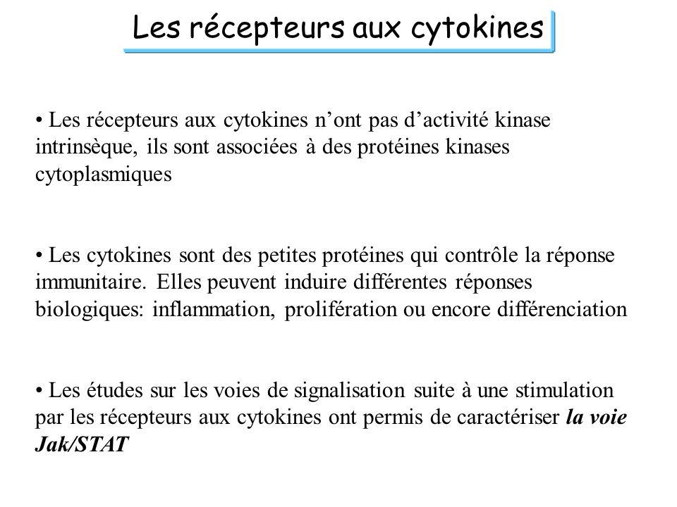 Les récepteurs aux cytokines