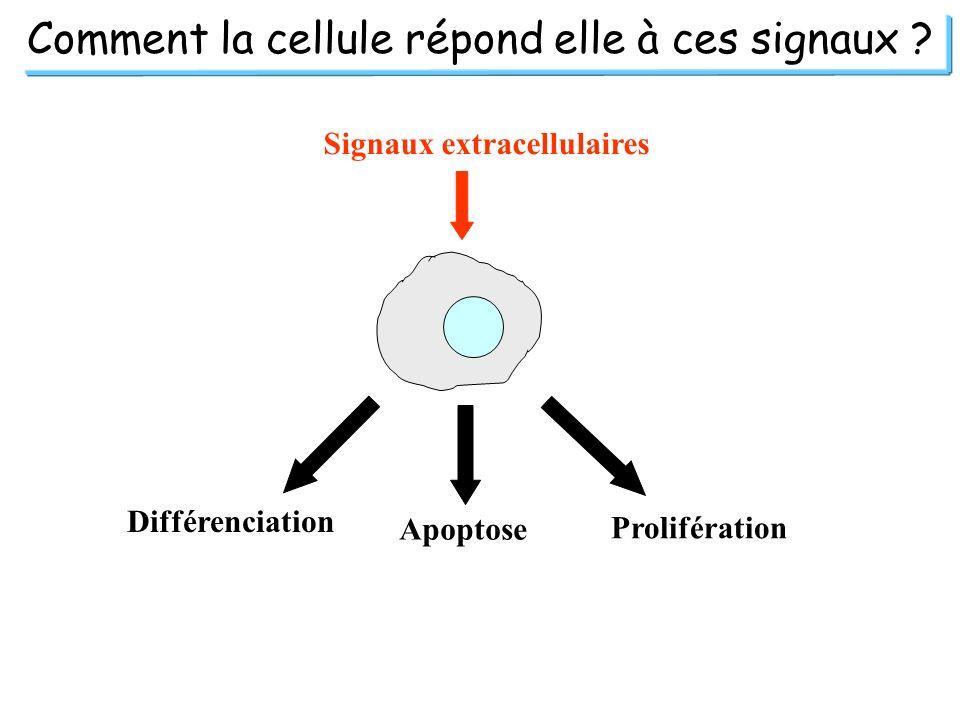 Comment la cellule répond elle à ces signaux