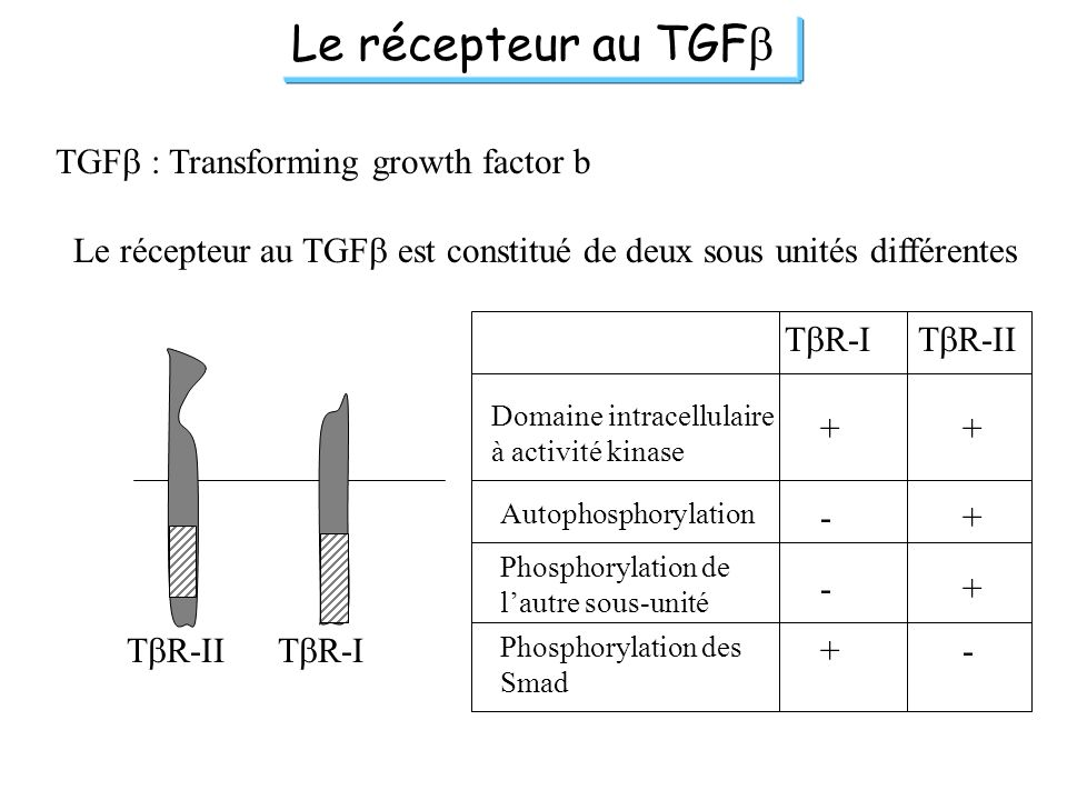 Le récepteur au TGFb TGFb : Transforming growth factor b