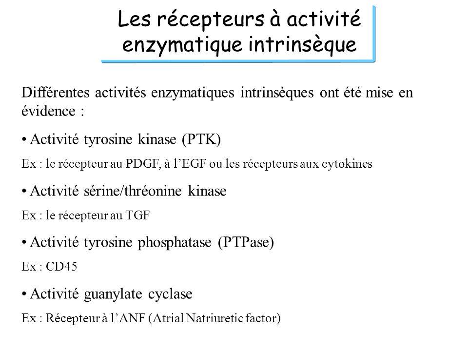 Les récepteurs à activité enzymatique intrinsèque