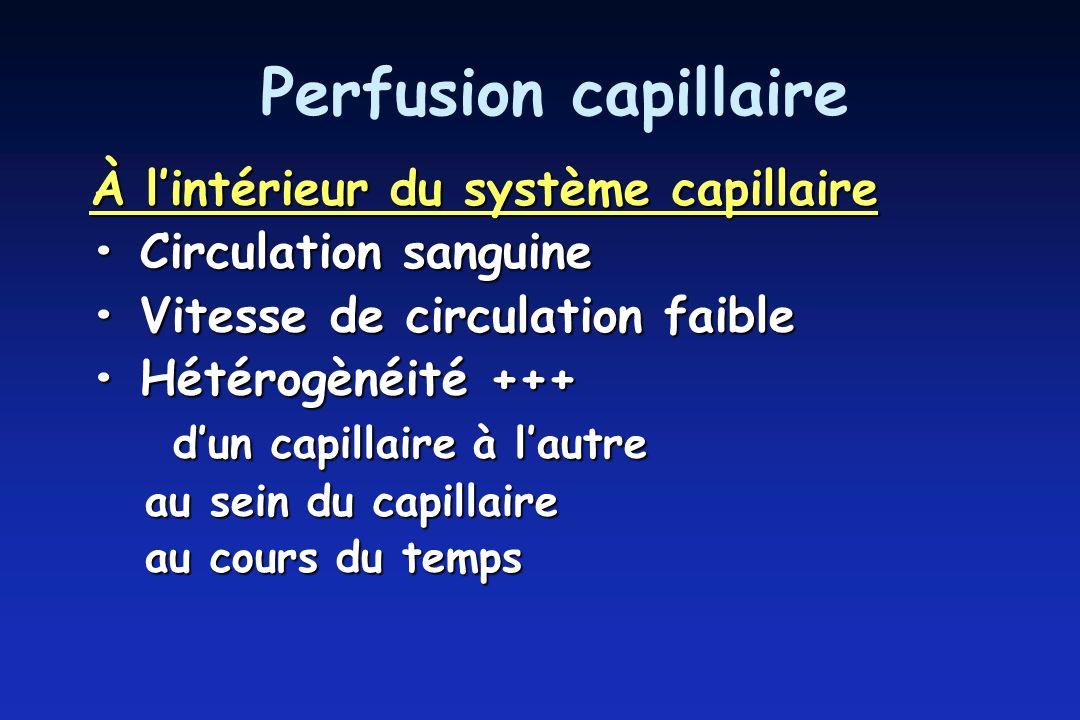 Perfusion capillaire À l'intérieur du système capillaire
