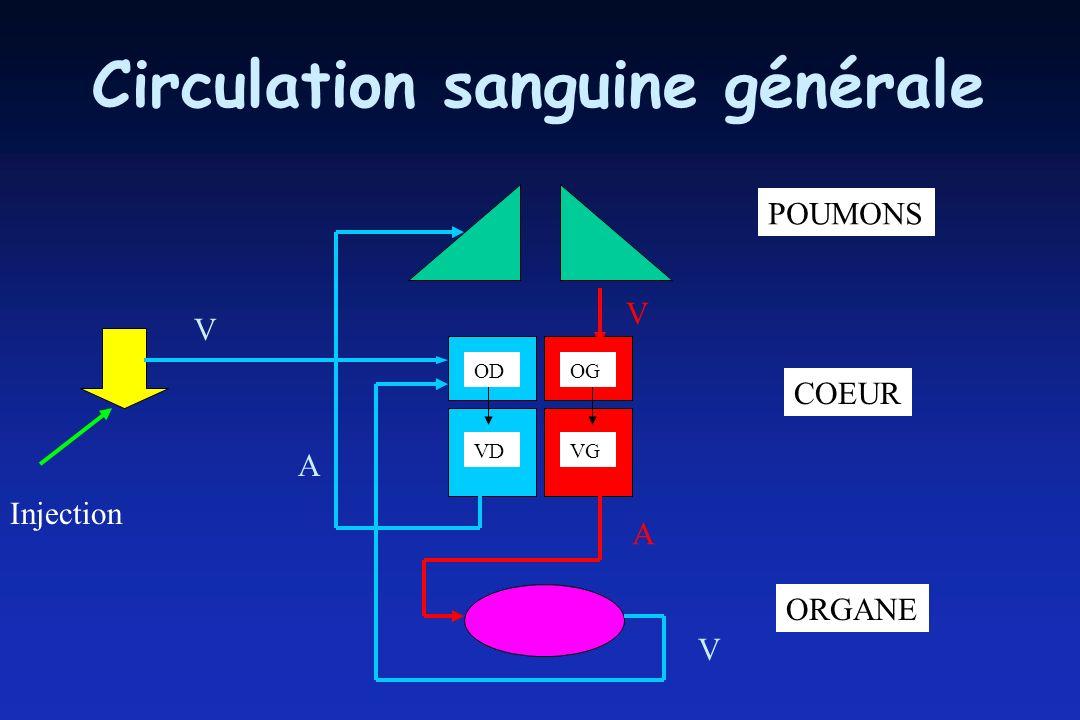 Circulation sanguine générale