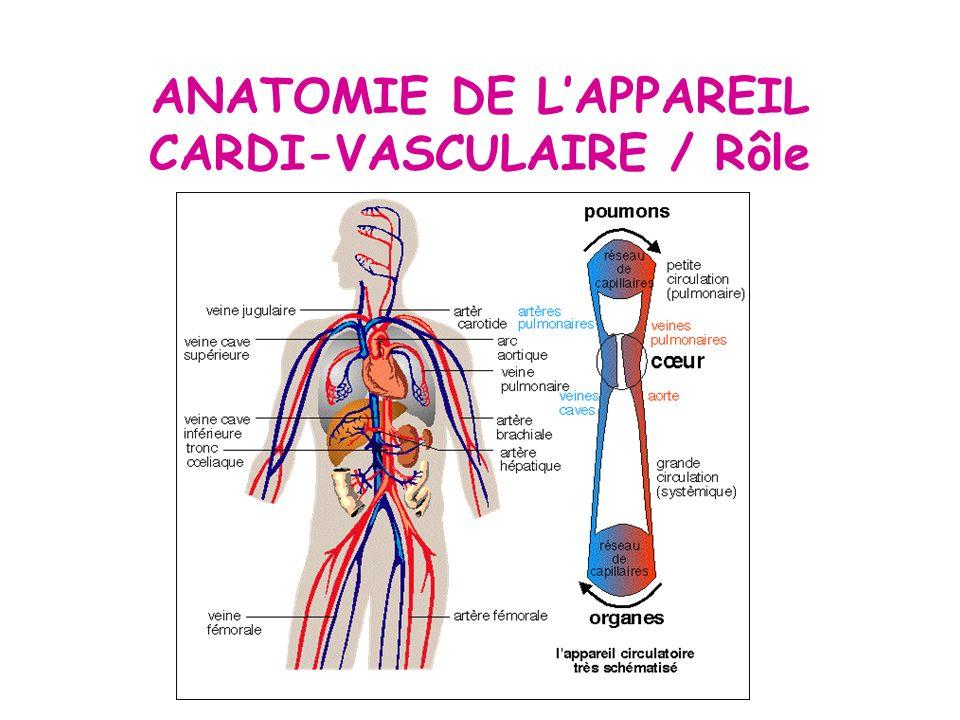 Groß Kurse In Anatomie Und Physiologie Fotos - Menschliche Anatomie ...