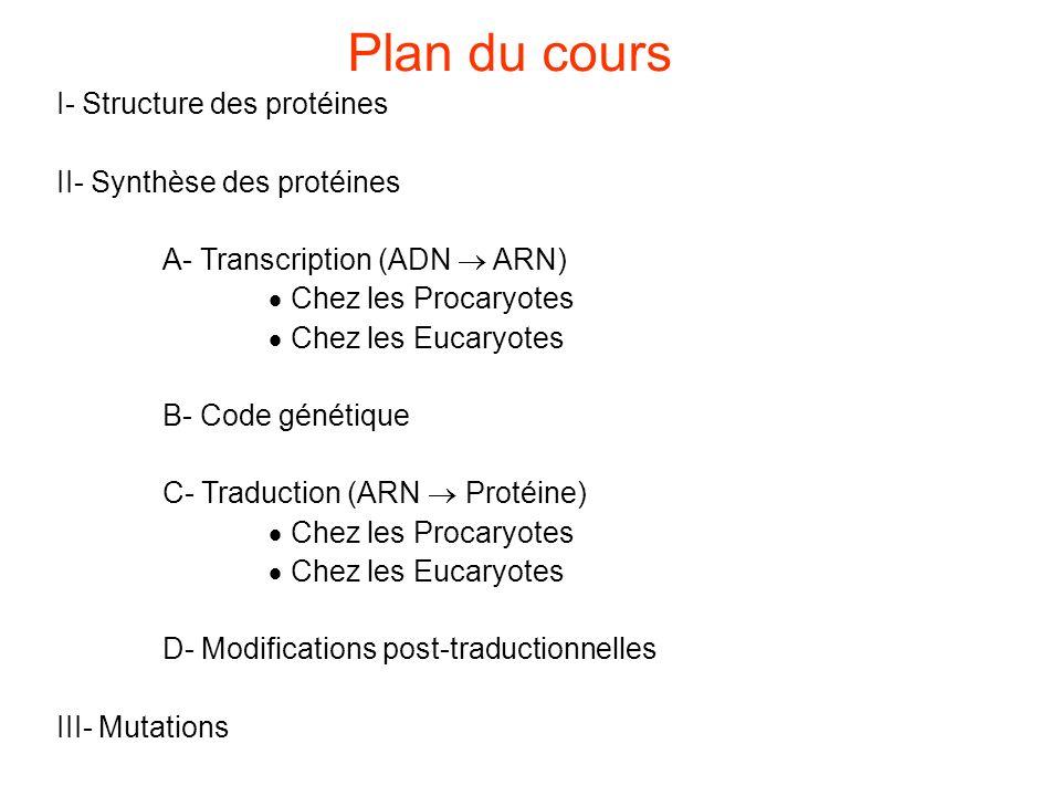 Plan du cours I- Structure des protéines II- Synthèse des protéines
