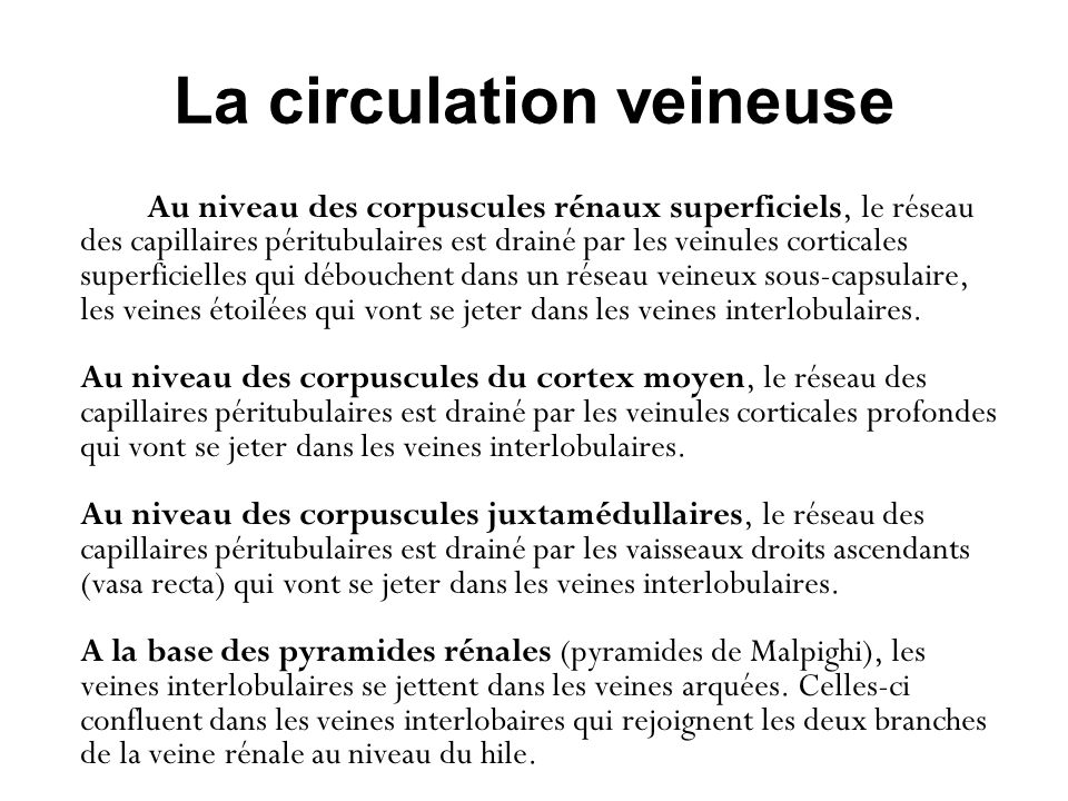 La circulation veineuse