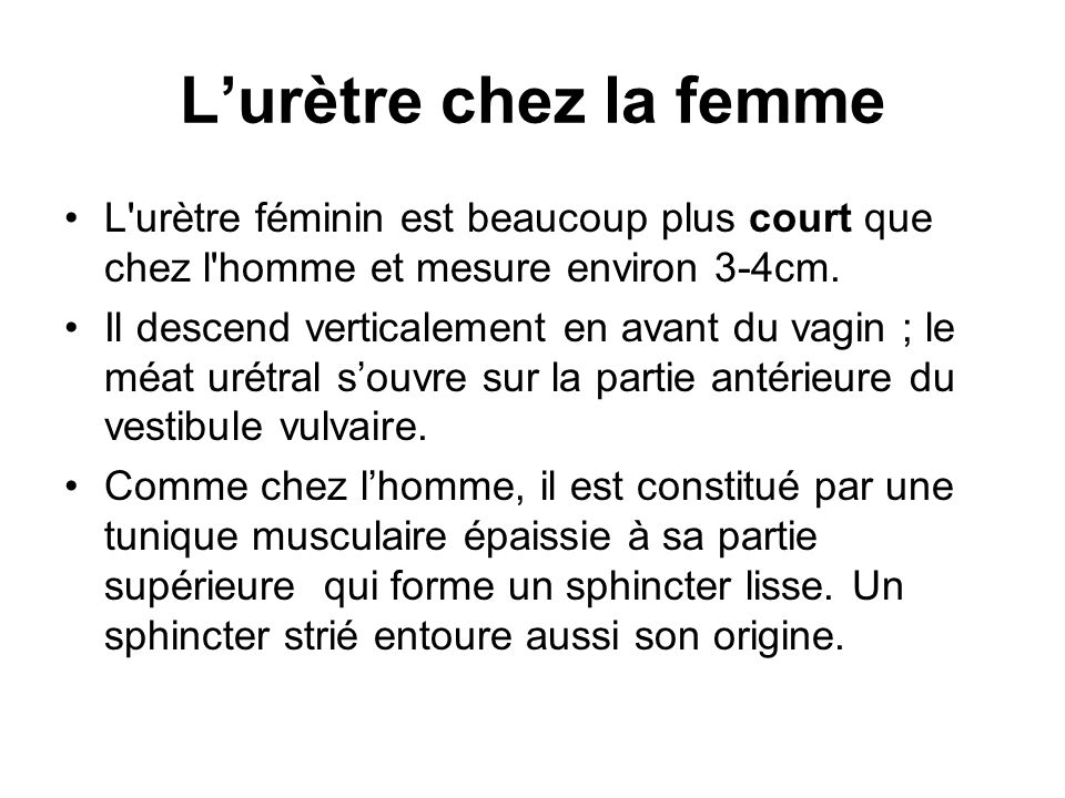 L'urètre chez la femme L urètre féminin est beaucoup plus court que chez l homme et mesure environ 3-4cm.