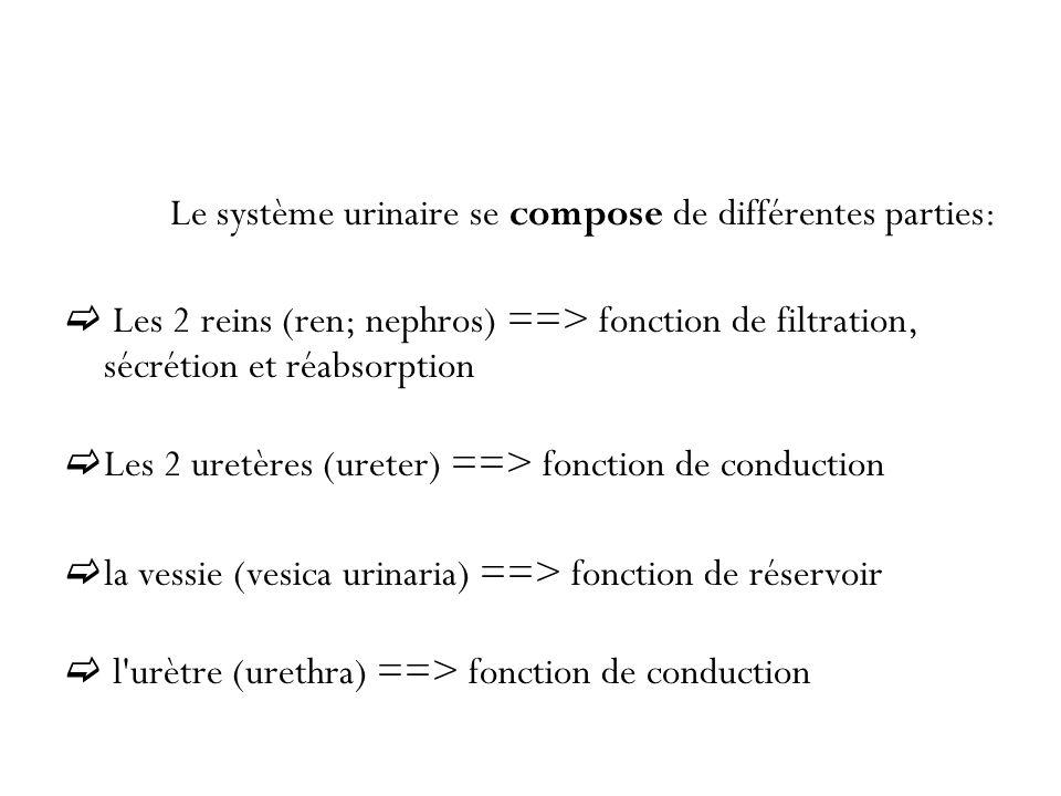 Le système urinaire se compose de différentes parties: