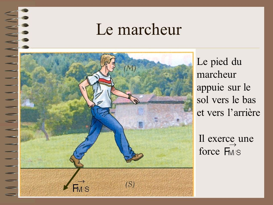 Le marcheur Le pied du marcheur appuie sur le sol vers le bas et vers l'arrière Il exerce une force
