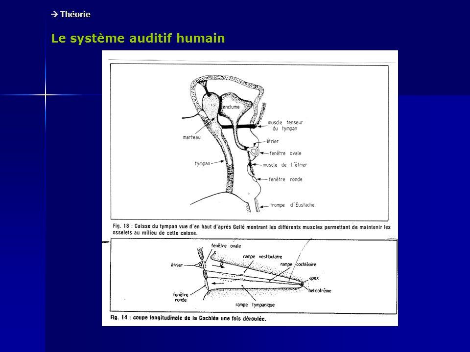 Le système auditif humain