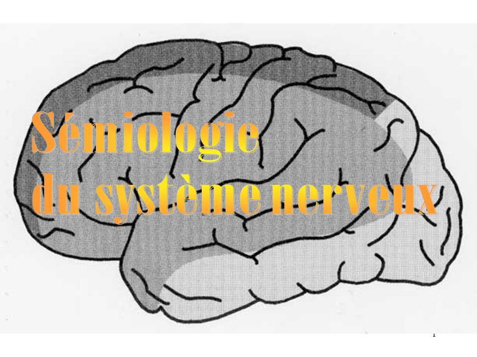 Sémiologie du système nerveux