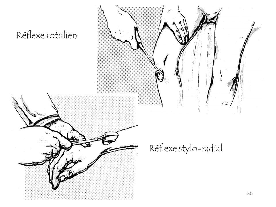 Réflexe rotulien Réflexe stylo-radial