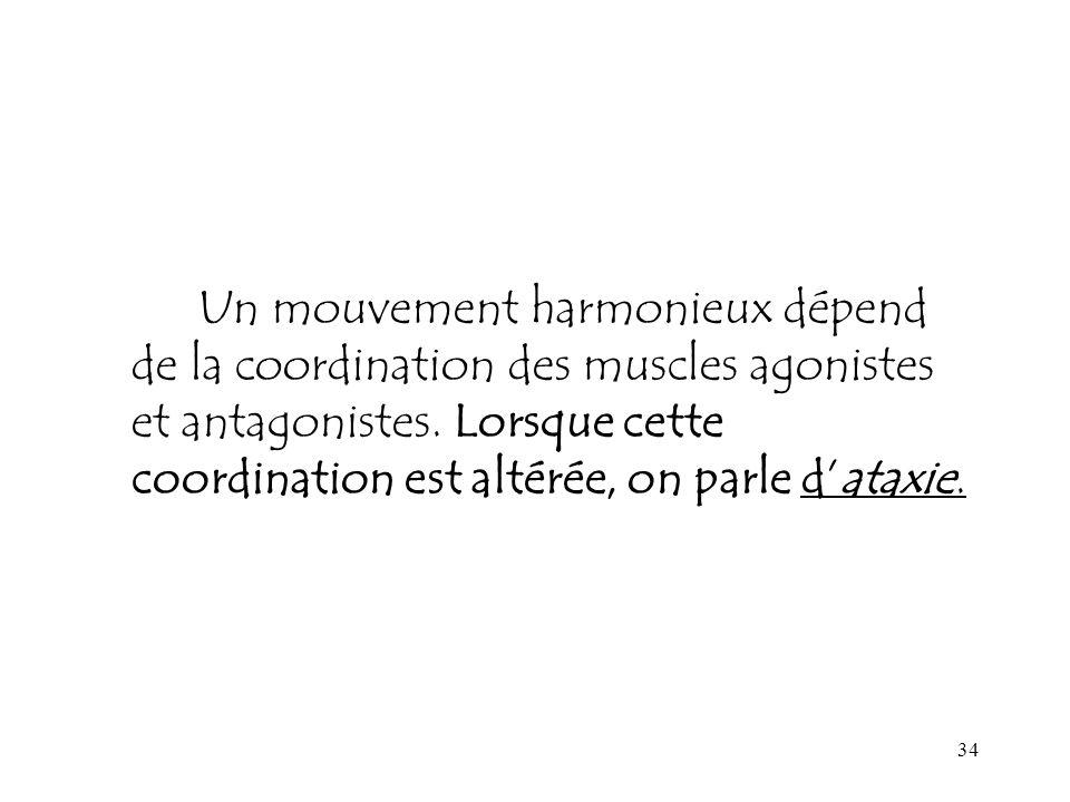 Un mouvement harmonieux dépend de la coordination des muscles agonistes et antagonistes.