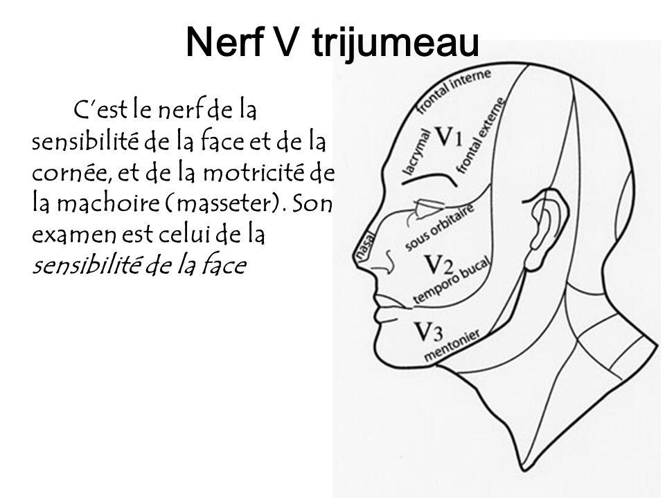 Nerf V trijumeau
